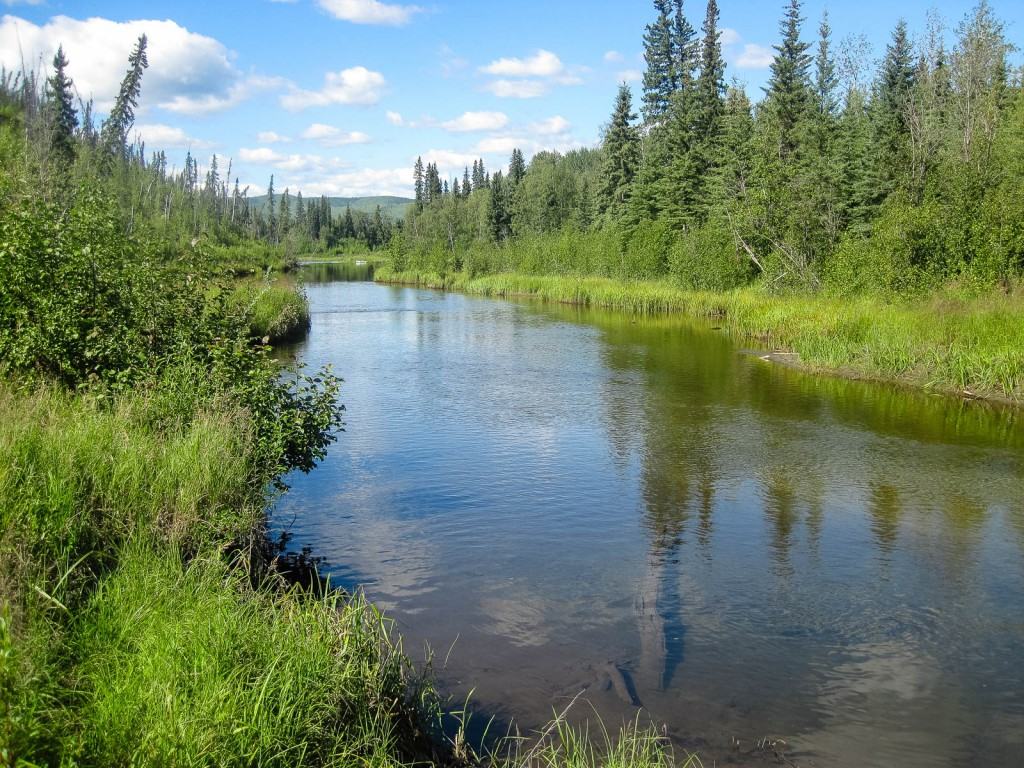 A slow off-channel slough where a tributary enters the Chena