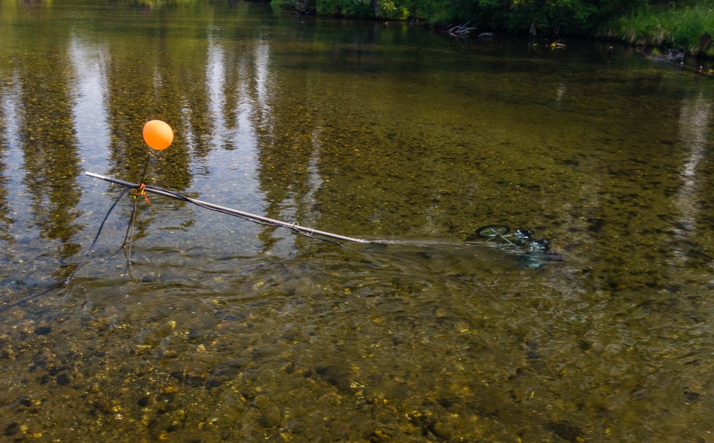 Cameras set up recording grayling in the Clearwater